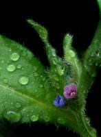 Ну очень маленький цветочек